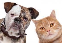 10 sykdommer du kan få fra kjæledyret ditt