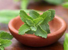 Stevia vs Sukker - hva er sunnest