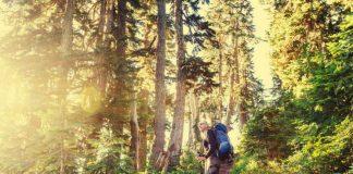 5 helsegevinster ved å gå tur i skogen